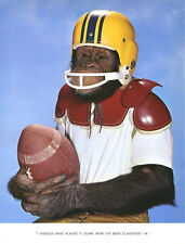 1 Vintage Art Photo Page from Chimp Chat Book 1960 Monkey outfit Football player