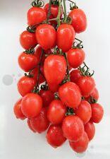 Tomato Vegetable seed 30 seeds Stachys sieboldi Miq. garden yard patio plants