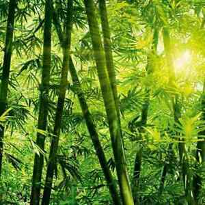 W&G Photo Mural Bamboo Forest Decorative Peel Wallpaper Wall Covering Print