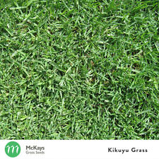 McKays Kikuyu Grass Seed Blend - 3kg - Lawn Seed (Contains 20% Kikuyu)