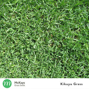 McKays Kikuyu Grass Seed Blend - 1kg - Lawn Seed (Contains 20% Kikuyu)
