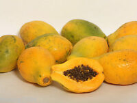 50 Fresh Seeds Golden Yellow HAWAIIAN PAPAYA Hawaii Tropical Fruit