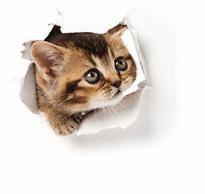Kitten Cat Poking Head Through Wall - Car or Wall Decal Sticker