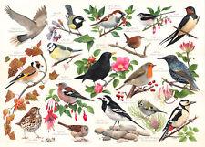 La House of Puzzles-Puzzle 1000 PEZZI-Uccellini nel mio giardino