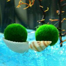 Nano Marimo Moss Ball-algae Live Aquarium Plant Fish Tank Supply Sale G2A5 A3E8.