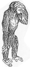 Wood Mounted Rubber Stamp, Circus Animals, Humorous Stamps, Wildlife, Chimpanzee