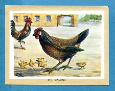 NATURAMA - Lampo 1968 - Figurina-Sticker n. 214 - GALLINA -Rec