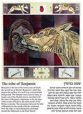 Sagittarius, the tribe of Benjamin, Jasper stone, Jewish Horoscope postcard.