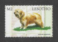 Dog Art Full Body Portrait Postage Stamp Catalan Pyrenean Shepherd Lesotho Mnh
