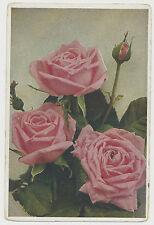 AK bella varietà di rose signora Edith Helen (s383)