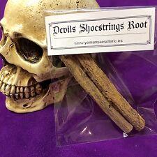 DEVILS SHOESTRINGS ROOT ⭐️ Raíz agujetas del Diablo
