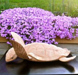 """Sea Turtle Root Sculpture 19"""" Long - Hand Crafted - Hard Wood"""