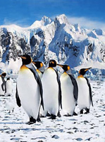 PENGUIN, ORCA WHALE AND POLAR BEAR  - 3D FLIP PICTURE 300mm X 400mm
