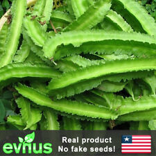 10 Thai Winged Bean Seeds Dragon Bean Dau Rong Thai Princess Bean