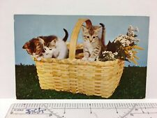 Postcard Cats Kittens in Basket Vintage