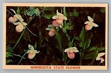 Minnesota MN State Flower Showy Lady Slipper Vintage Color Postcard 1950s