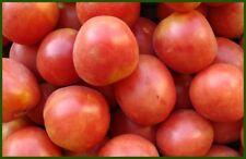 20 Graines /seeds de tomate colgar Bio