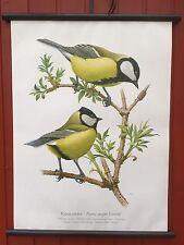 Kohlmeise Meise  Vogel Singvögel Rollkarte -Schulwandkarte -Lehrtafel 50 x 70