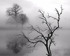 Tree Art Photo Print Gray Black White Fog Wall Art Home Decor Picture Matted