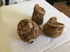 3 fossil Sponges , Raphidonema farringdonense
