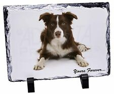 "Liver and White Border Collie ""Yours Forever..."" Photo Slate Christm, AD-CO81ySL"