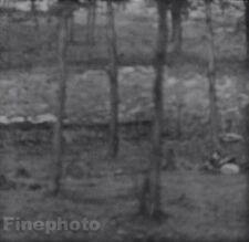 1899/63 Vintage Print 11x14 Woods WISCONSIN Landscape Photo Art EDWARD STEICHEN