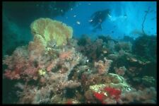 012062 Diver Viewing Coral Reef A4 Photo Print