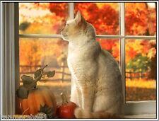 4Pack Cat Cats Kitten Kittens Autumn Stationery Greeting Notecards / Envelopes 8