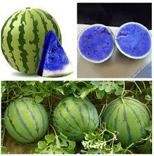 Watermelon Prince Graines Organique Graines Non-OGM graines Ukraine 3 G Farmer/'s Dream