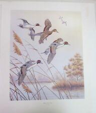 """Dave Chapple """"Autumn Mist - Pintail"""" Ducks, Ltd Edition Art Print 54/350 - 1985"""