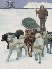 SIBERIAN HUSKY SLED DOG TEAM LOVELY GREETINGS NOTE CARD