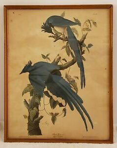 """Vintage Framed 1948 Audobon """"Columbia Jay"""" Victorian Birds Lithograph - London"""