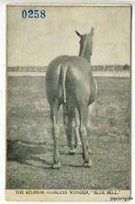 "Hairless Wonder Horse ""Blue Bell"" Circus Postcard"