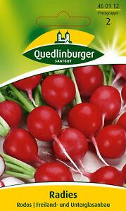 Quedlinburger Saatgut - Radieschen Samen - Rodos