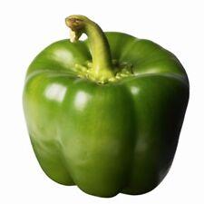HY. CAPSICUM CALIFORNIA WONDER GREEN OR हरी शिमला मिर्च (VEGETABLE SEEDS)