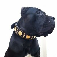 "Bestia ""Maximus"" genuine leather dog collar & leash. Large breeds. 2.5 inch wide"