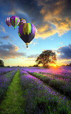 STUNNING HOT AIR BALLOONS LAVENDER FIELD CANVAS #267 QUALITY WALL ART PICTURE