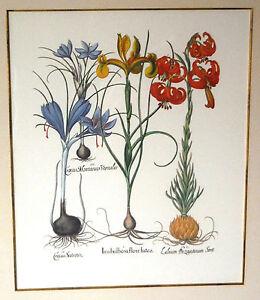 """Besler,Fine Art Botanical Print Antique Flowers Floral, Framed 36""""x32"""""""