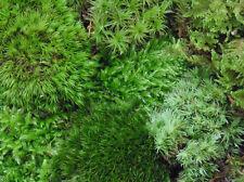 Huge Bag Terrarium Live Moss Assortment  Fern Frog Cushion Mood Terrariums Fairy