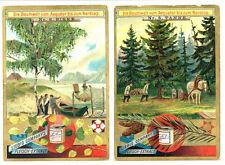 Liebig-FIDASS: arn.350, Sang .501: il mondo albero dall'equatore fino al NORDCAP