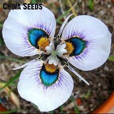 USA-Seller 100pcs Orchid Seed Flower Seeds Rare Home Garden Mixed Colors