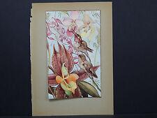 Botanicals, Floral, Edward J. Detmold, c. 1913 #10