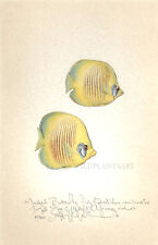 Ocean sea BUTTERFLY FISH original handworked limited edition print - LARGE SIZE