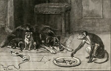 BORDER COLLIE WORKING SHEEPDOG ANTIQUE DOG PRINT ENGRAVING Monkey Petty Larncey