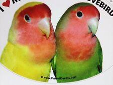 Peach Faced Lovebird Parrot Exotic Bird Vinyl Decal Bumper Sticker