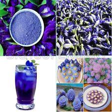 2oz.Natural Butterfly Pea Clitoria Ternatea Blue Tea Drink Food Color Powder