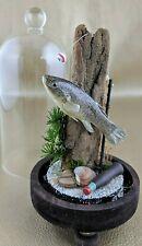 w71b Taxidermy Mummichog Glass Dome Display specimen Collectible fish fishing