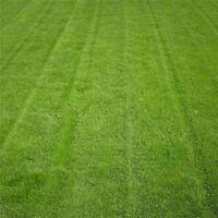 10000Pc fétuque herbe verte graines Festuca Arundinacea pelouse terrain de gazon
