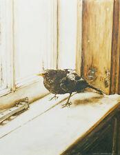 Blackbird  POSTCARD Garden Song Bird Painting Steve Greaves Print Art Card