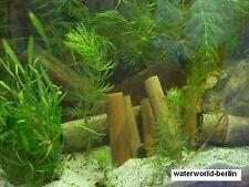 *** 3 *** unbehandelte Bambusstäbe für`s Aquarium Top Deko * NEU *
